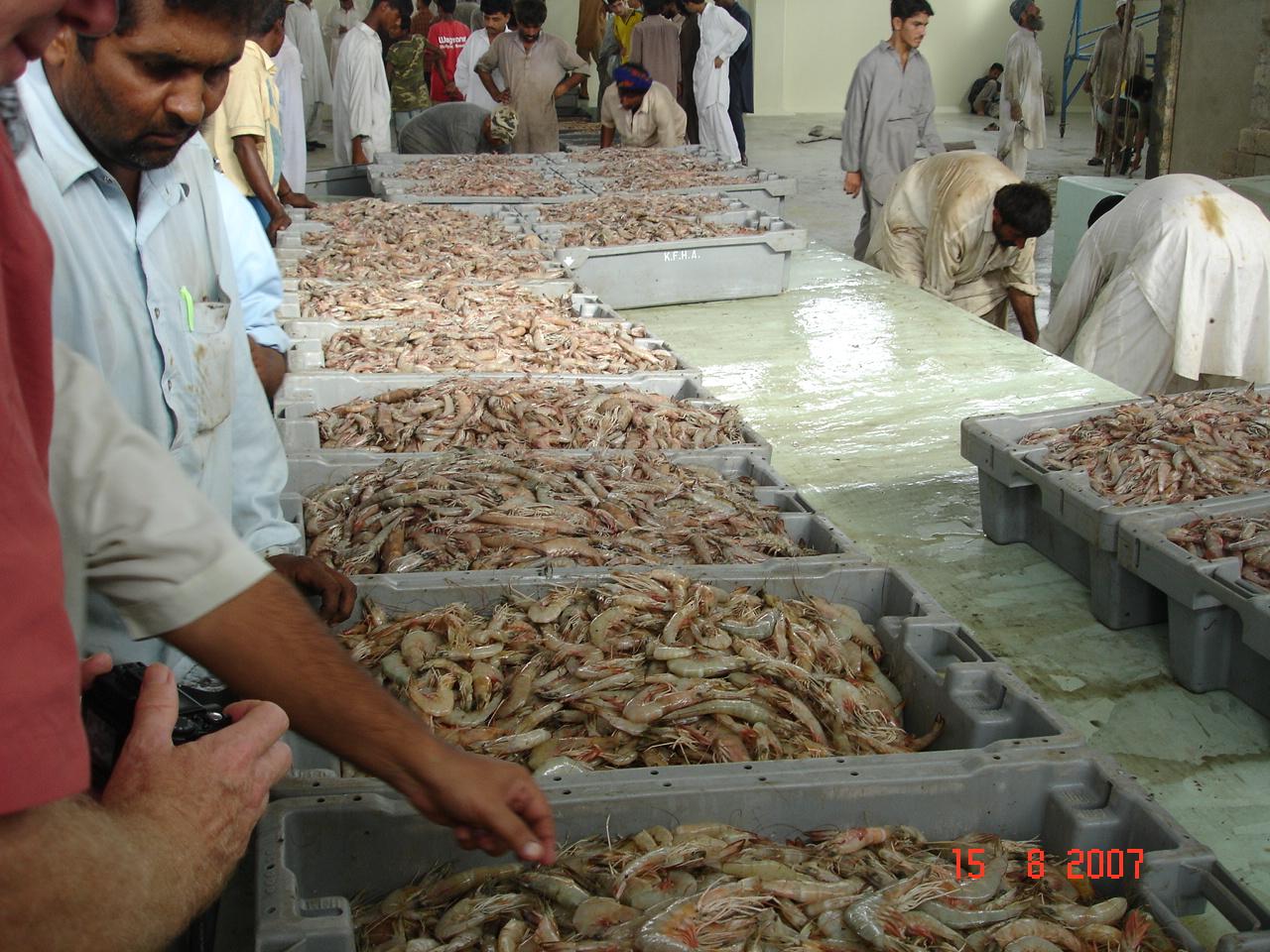 R Fisheries Fisheries – TRTA Pak...