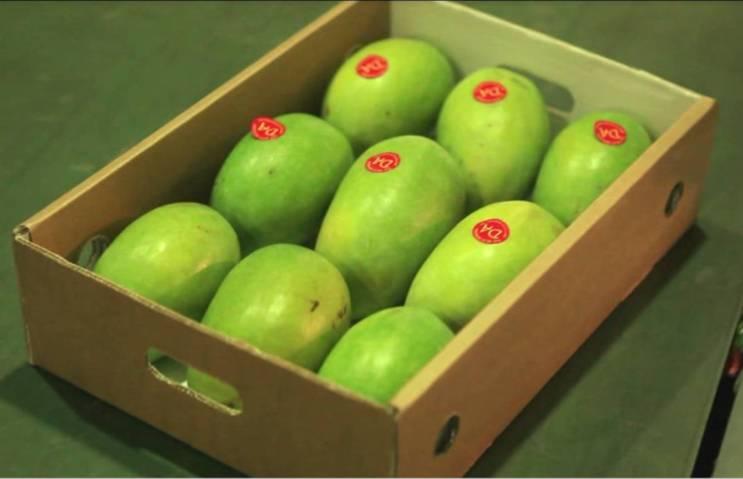 Pakistani Mango Export – TRTA Pakistan