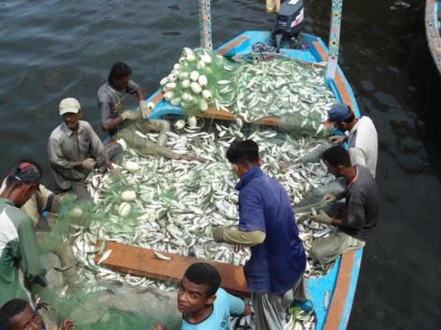 Baluchistan - Fish handling on boat