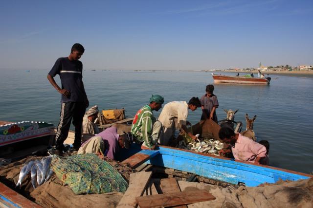 Baluchistan - Fish handling