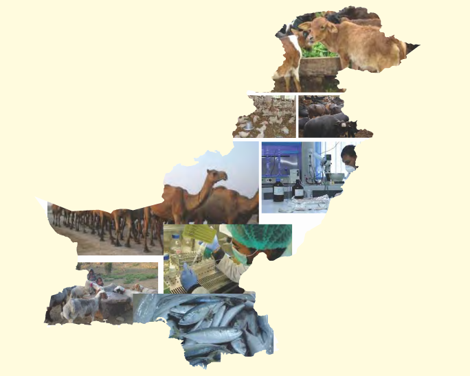 Baseline-information-on-Veterinary-Services-and-Animal-Health-in-Pakistan-September-2014